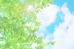 青空に向かって伸びる緑の木々。
