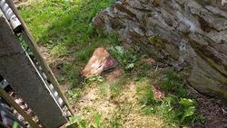 Baumstumpf Mauer und Zaun