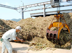 3年ぶりの生産量7万㌧台が予想されている石垣島製糖(5日)