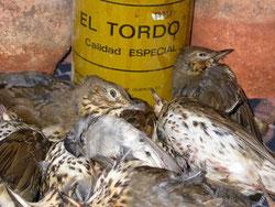 Aves afectadas por el pegamento de los paranys