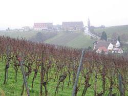 Wetter nicht schön aber die Südpfalz