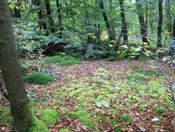 Unendliche Weiten des Waldes