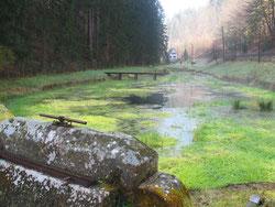 An der Speyerbachquelle