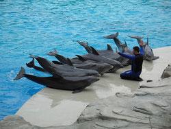 Delfini al Parco Oltremare di Riccione (Roberto Ferrari)