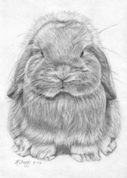 Pencil of a Mini Lop by Helen Chugg