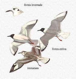 http://www.ittiofauna.org