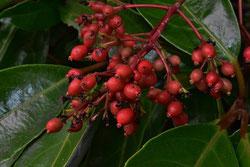 樹木 種子 画像