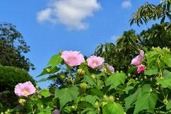 花期が長い庭木 何