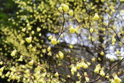 今咲いている木になる花