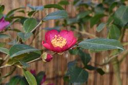 花期が長い庭木 種類