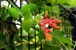 花期が長い庭木