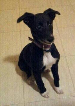 Iris adoptada!!