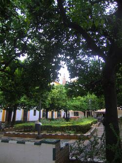 Plaza de Doña Elvira. ©María Sánchez Mellado