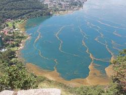 Vista aérea del lago de Atitlán, Sololá, contaminado con cianobacteria. Foto: © Ángel Julajuj / Prensa Libre