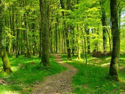 La forêt de Cerisy ©OTI IO