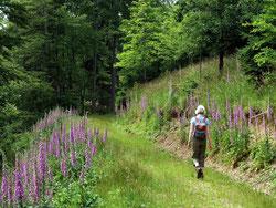 Einsamer Wanderweg im Steinbachtal