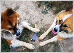Apportiertraining Hundetraining Bonn