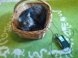 Power QuickZap Katze