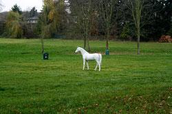 38 Pferd/Horse