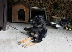 23 Hund/Dog