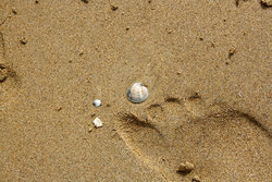 65 Strandgut und Fußabdruck/Jetsam and Footprint