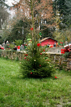 40 Weihnachtsbaum/Christmas tree