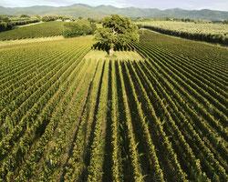 дегустации супертосканских вин super tuscany