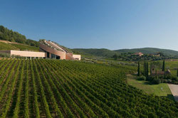дегустации вин юга тосканы