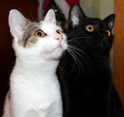 Freddy und Roxy, einst halb verhungerte arme Strassenkätzchen, dürfen nun in eine wunderbare Zukunft schauen.