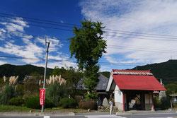 長瀞七草寺・尾花(すすき)の道光寺