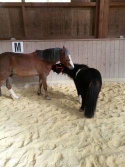 Nico und Felix bei der Fellpflege