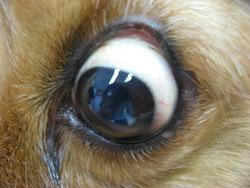 現在のリリちゃんの眼
