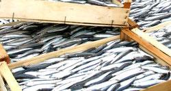 Mangiare pesce fa bene alla salute: ecco perchè