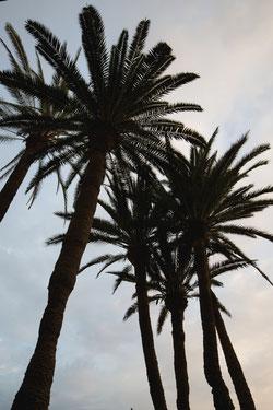 Palmen, Gran Canaria, photo: Anna Grünauer