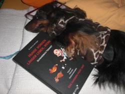 Schule für Hundehalter