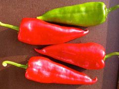 milde Schärfe Spitzpaprika rot Saatgut20 Samen ausdauernd