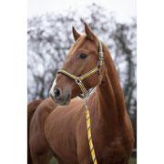 Halfter Full Numbers 36F weich unterlegt  fürs empfindliche Pferd Western Show