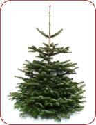 weihnachtsbaum online bestellen tannenbaum kaufen mit. Black Bedroom Furniture Sets. Home Design Ideas