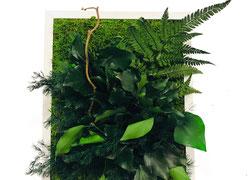 Tableau Vegetal Stabilise Vegetal Indoor Mur Végétal Stabilisé