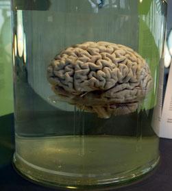 Yummy! Gehirn im Neandertalermuseum Mettmann. ;-)