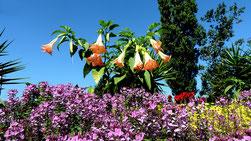 Ein heisser Sommer-Sonntag - Ueberall gepflegte, schöne Blumen-Arrangements.  (Foto: Hans Weiss, Flawil)