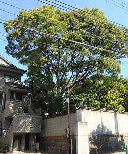 鎌八幡の戦後の木