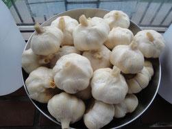 玄米乳酸菌発酵完了→常温発酵へ