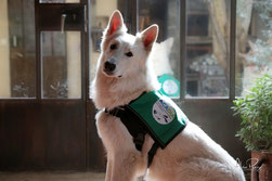 Lape, chien d'assistance pour diabétique. Crédit : ACADIA