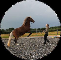 Horsemanship mit Vielgefühl by Heike Gunzenhauser