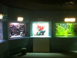 Glaskratzer im Aquarium