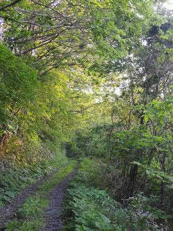 緑のトンネルが気持ちいい!ここを7,8分ほどかけて歩いていくと・・・