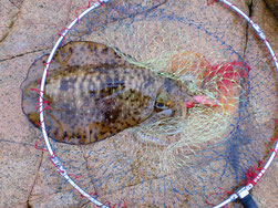 アオリイカの釣り場 下関市山陰・日本海側