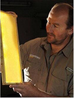 ブレア・デイルがストラスデイルハニーの巣枠を調べているところ。