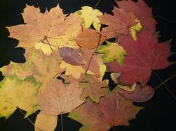 gepresste Herbstblätter